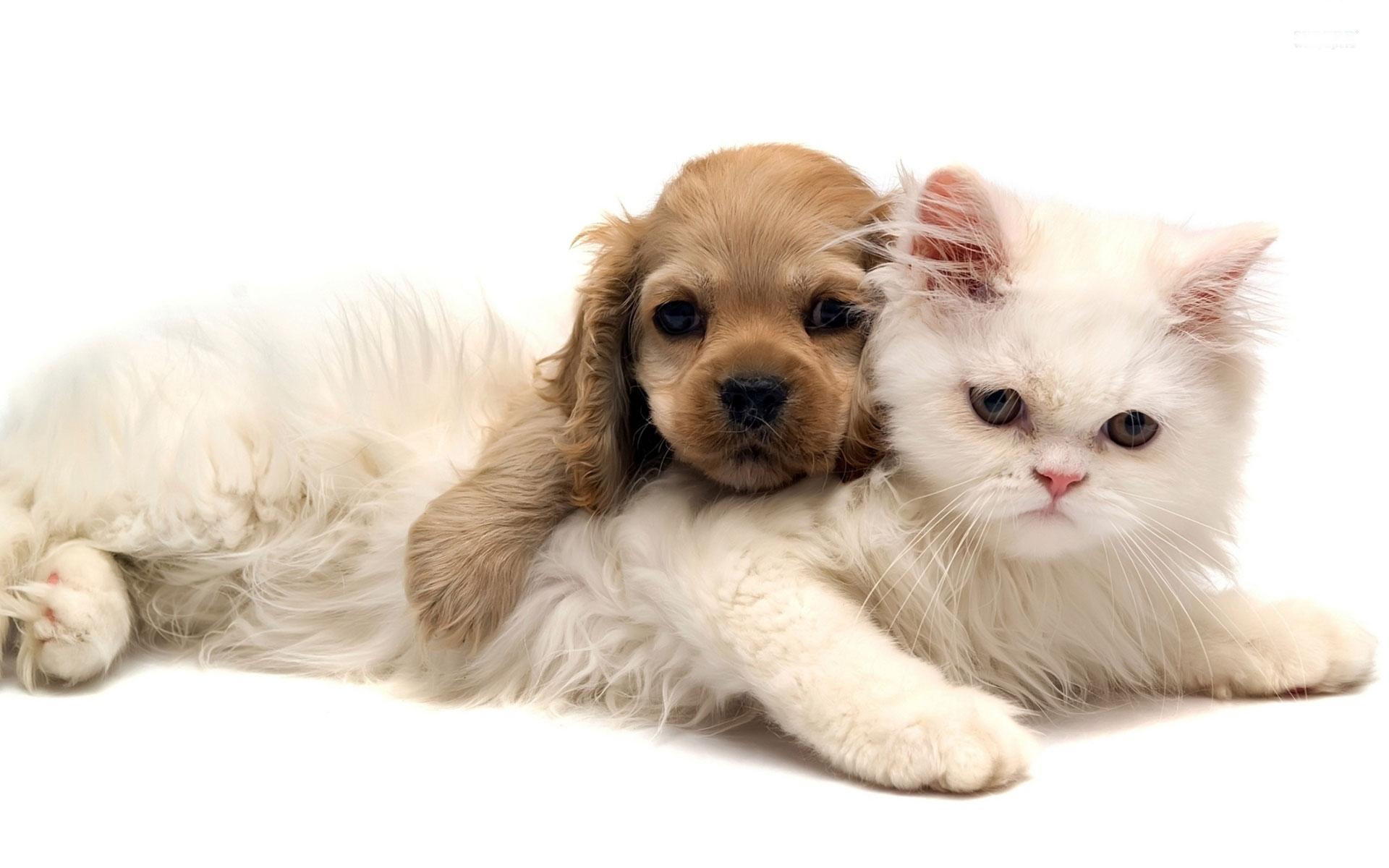Connolly Animal Clinic Veterinarian In Nacogdoches Tx Usa Fear